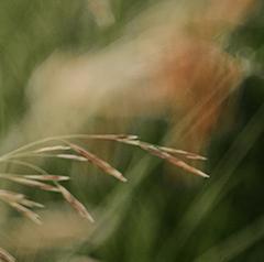 兰州农业物联网 兰州现代农业物联网 兰州智慧农业 兰州智慧农业云平台
